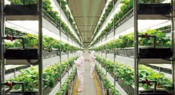 日清紡による植物工場によるイチゴ生産 2011年から販売へ
