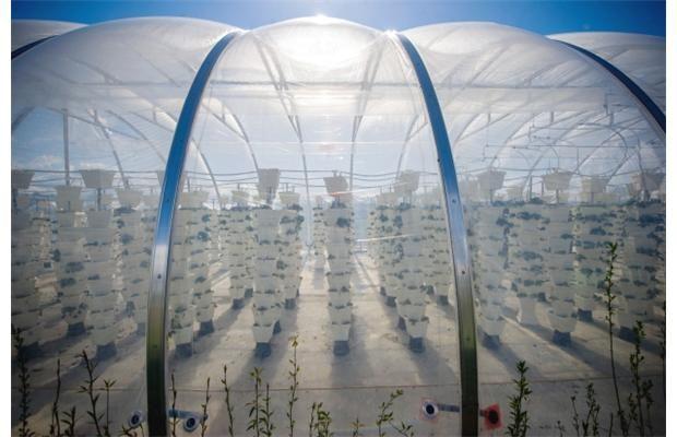 カナダ、ドーム型植物工場・イチゴの垂直式栽培の試験稼働へ