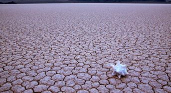 世界最大の農業生産地カリフォルニア州、干ばつ被害は約22億ドル