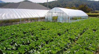 韓国ソウル市による都市型農業計画、2018年までに約1800カ所の農場整備へ