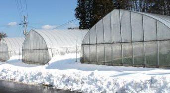 埼玉県が雪害に強いハウス分析、単棟建設や補強材の活用呼び掛け