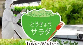 東京メトロ、完全人工光型植物工場が農業認証「JGAP」を取得