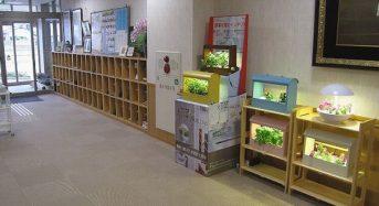 オリンピア照明の小型植物工場・水耕栽培キット、コミュニケーションツールとして老人ホームが導入