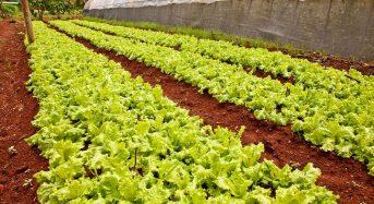 1万以上もあるキューバの有機都市型農場、大きなビジネスチャンスとして狙う米国の農業資材メーカー