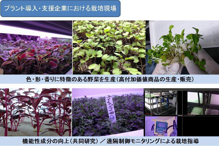 植物工場設備販売(人工光型)