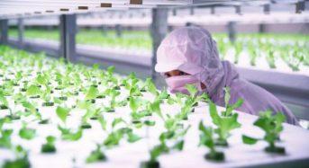 ハウス食品グループ・イノベーションファンド、植物工場ベンチャーのファームシップへ出資