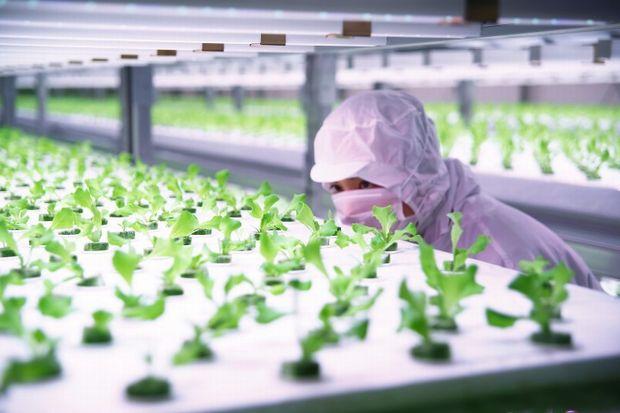 植物工場ベンチャーのファームシップ社が1億円の資金調達。栽培ノウハウの確立・システム開発を加速