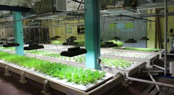 植物工場・アクアポニクスの米国NPO、ローカル・フード確立のため30万ドルの資金調達