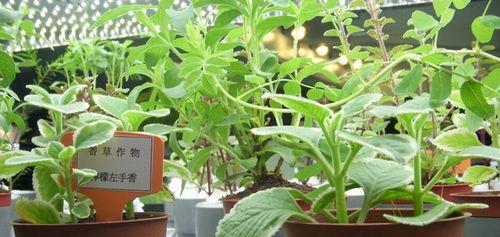 台湾における植物工場の市場概要と現状分析