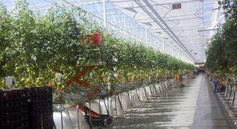 カナダの植物工場市場、施設面積1,335ha・市場規模1,568億円にて主力産業の一つ