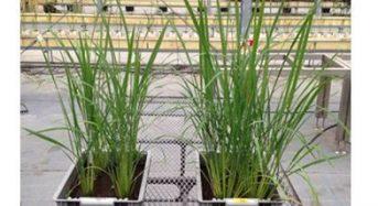 アサヒグループHDなど、酵母副産物を用いた農業生産システムを開発。生産性向上と持続可能な社会を実現