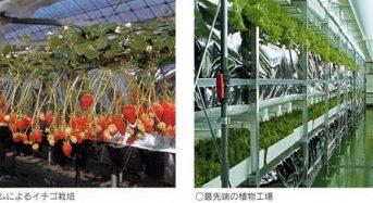 住友化学、シンガポール政府と都市型農業PJ開始。屋上スペースでの植物工場も視野に