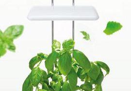 オリンピア照明、壁掛けタイプの新たな家庭用・植物工場キットを販売
