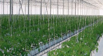 ロシアのVTB銀行、アルメニアにイチゴの植物工場プラント建設に資金提供