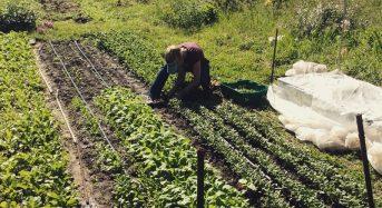 米国ワシントンDCでも都市型農業法案が施行。植物工場には適用されない可能性も