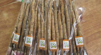 福岡銀行など、ゴボウ生産の農業法人へ3000万円を出資。六次産業化による全国展開を目指す