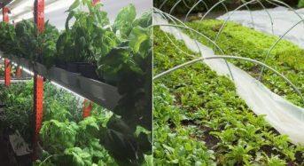 カナダ・エドモント市による法改正、植物工場や屋上菜園など生産方式の明確化