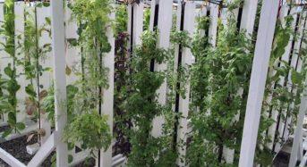 水不足のカリフォルニア州、水耕技術による新たな都市型CSA農業モデルを実践