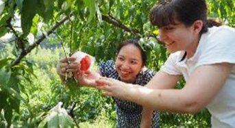 JAバンク・リクルートライフスタイルなど農業体験やインバウンド向けサービスを展開