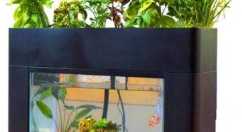 おうち菜園、家庭用アクアポニクス栽培キットをクラウドファンディングにて販売