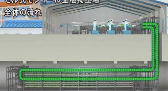 伊東電機、セル式モジュール型植物工場を開発。千葉幕張の地下スペースにも導入