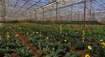 ベトナム・ホーチミン市が農業の近代化プランを発表。農家平均所得を32万円以上へ
