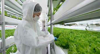 センコン物流、エスペック社の植物工場システムをロシアへ輸出