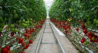 米国オハイオ州にて国内最大規模の植物工場施設を建設。長期計画にて1億ドル以上の投資額へ