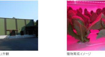昭和電工による協栄興業の植物工場設備を建設。最大で日産3000株の生産と機能性野菜の研究も