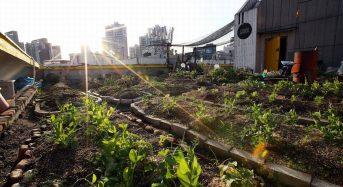 韓国ソウル市の「地産地消型クッキング講座」屋上ファームと料理教室の融合サービス