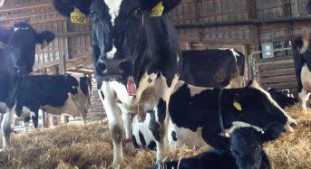 米国の農畜産ビジネス。全体の70%がICT自動化システムを導入・家族経営でも効率的な大規模生産へ
