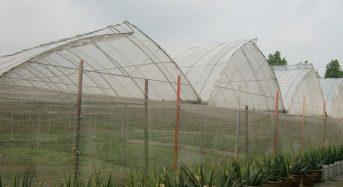 シンガポール政府、植物工場などハイテク農業を推進。農地リースも20年へ延長