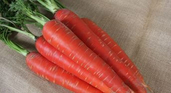 NKアグリ、露地野菜で初の栄養機能食品・リコピン人参「こいくれない」誕生