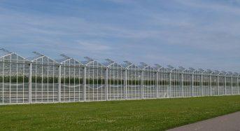 中東UAE・初めての太陽光利用型植物工場ベンチャー。来年夏にトマトを初収穫