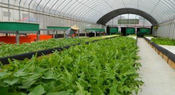 台湾「国際果実・野菜見本市」展示会、植物工場プラントメーカーからアクアポニクスまで幅広く出展