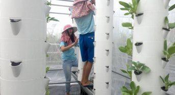 TOEFLテストと国際教育交流CIEE、台湾で短期農業ボランティア開催。台湾伝統農法の水耕栽培も体験