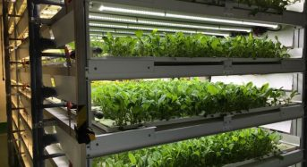 三菱化学、フィンランドのレストランと完全人工型植物工場「Plant Plant」の実証試験を開始