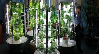 米国にて普及が進む教育向けの植物工場キット。都会の学校にて総合的な教育プログラムを提供