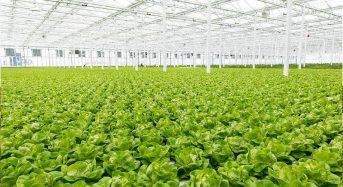 矢野経済、人工光型植物工場の市場規模は2013年で約33億円