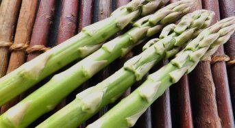 明治大学による新たなアスパラガス栽培技術に関する成果報告とセミナー開催