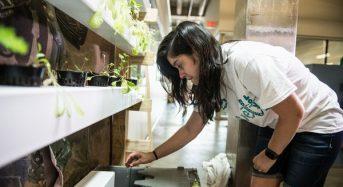 米国ライス大学、学生が製作するエコ・ハウスに最適な植物工場づくり