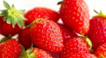 トヨタ、農研機構とイチゴの品種改良を効率化する高精度選抜技術を開発