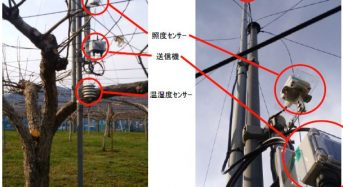 NTT東日本、JAふくしま未来が圃場センシングソリューションを導入