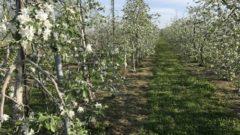 日本農業インコーポレイテッド、生産法人と「輸出用りんご生産」の業務提携