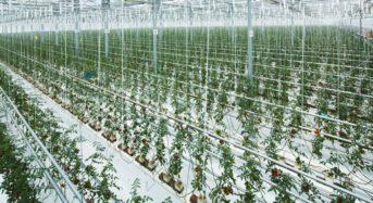 JFEエンジ、太陽光利用型植物工場を札幌市に稼働。北海道内2番目の生産拠点へ