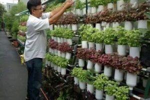 ジャカルタのグリーンシティ―計画、水耕・多段式など150もの都市型農場をオープン