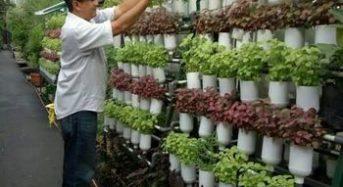 ジャカルタのグリーンシティ―計画。水耕・多段式など150もの都市型農場をオープン