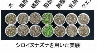 理研など、植物に酢酸を与えると乾燥に強くなるメカニズムを発見