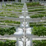 シンガポールのビル屋上、タワー型水耕栽培にて野菜を生産「シティーポニクス社」