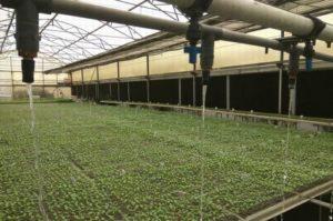イスラエルのハイテク農業が普及するインド。政府による補助政策も